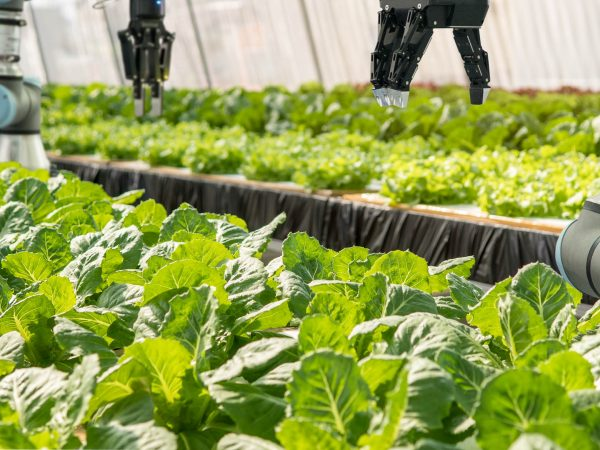 An image of smart robotic farmers tending to a vegetable farm.