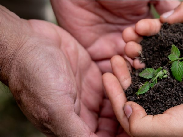 Image of hands holding a sapling in mud
