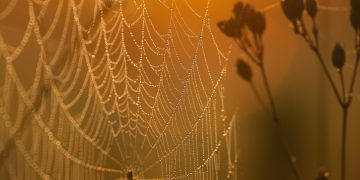 Spider Web In The Rays Of The Rising Sun Gold Drops