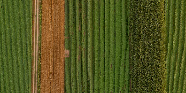 Overhead view of farmland.
